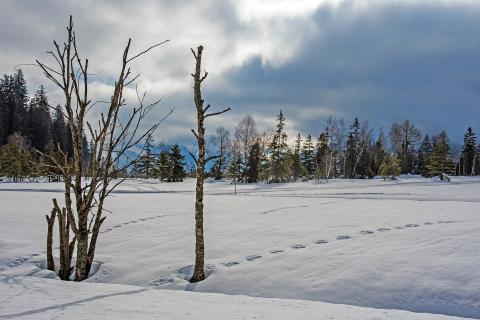 Tote Bäume im Winter