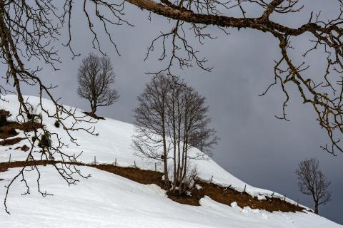 Bäume in einer Winterlandschaft